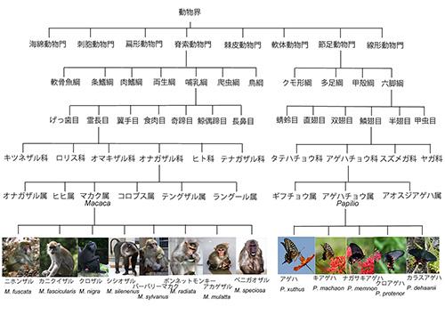 進化の歴史|科学バー